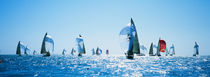 Sailboat Race, Key West Florida, USA by Panoramic Images