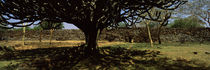 Lake Victoria, Great Rift Valley, Kenya by Panoramic Images
