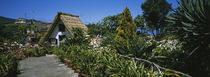Path leading to a house, Santana, Madeira, Portugal by Panoramic Images