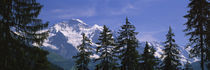 Mountains covered with snow, Swiss Alps, Wengen, Bernese Oberland, Switzerland by Panoramic Images