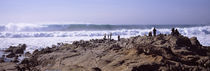 Waves in the sea, Carmel, Monterey County, California, USA by Panoramic Images