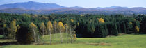 Trees in a forest, Stowe, Lamoille County, Vermont, USA von Panoramic Images