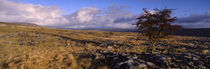 North York Moors, Yorkshire, England, United Kingdom by Panoramic Images
