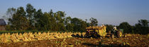 Two people harvesting tobacco, Winchester, Kentucky, USA von Panoramic Images