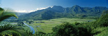 High angle view of taro fields, Hanalei Valley, Kauai, Hawaii, USA by Panoramic Images