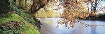 Trees along a river, River Dart, Bickleigh, Mid Devon, Devon, England von Panoramic Images