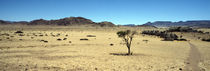 Horse ranch on a homestead, Namibia von Panoramic Images