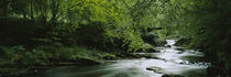 River flowing in the forest, Aberfeldy, Perthshire, Scotland by Panoramic Images