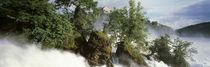 Waterfall in the forest, Schaffhausen, Switzerland von Panoramic Images