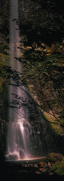Waterfall in a forest, Columbia Gorge, Oregon, USA by Panoramic Images