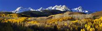 USA, Colorado, Rocky Mountains, aspens, autumn by Panoramic Images