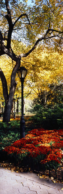 Lamppost in a park, Central Park, Manhattan, New York City, New York, USA von Panoramic Images