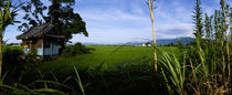 Rice paddies in a field, Saga Prefecture, Kyushu, Japan by Panoramic Images