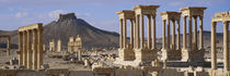 Colonnades on an arid landscape, Palmyra, Syria by Panoramic Images