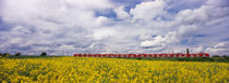 Commuter train passing through oilseed rape fields, Baden-Württemberg, Germany von Panoramic Images