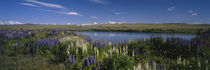 Mt Cook, Mt Cook National Park, South Island, New Zealand by Panoramic Images