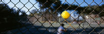 Close-up of a tennis ball stuck in a fence, San Francisco, California, USA by Panoramic Images