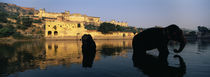 Silhouette of two elephants in a river, Amber Fort, Jaipur, Rajasthan, India by Panoramic Images