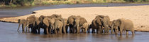 Herd of African elephants at a river by Panoramic Images
