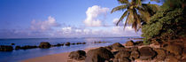 Rocks on the beach, Anini Beach, Kauai, Hawaii, USA by Panoramic Images