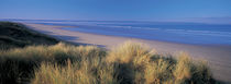 Tall grass on the coastline, Saunton, North Devon, England by Panoramic Images