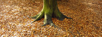 Low section view of a tree trunk, Berlin, Germany by Panoramic Images