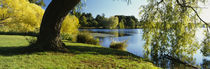 Willow Tree By A Lake, Green Lake, Seattle, Washington State, USA von Panoramic Images