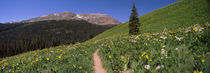 Crested Butte, Gunnison County, Colorado, USA by Panoramic Images