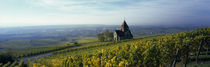 Rheinhessen, Rhineland-Palatinate, Germany von Panoramic Images
