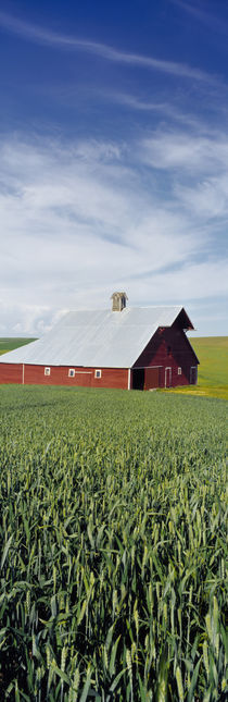 Barn in a wheat field, Washington State, USA von Panoramic Images