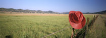 USA, California, Red cowboy hat hanging on the fence by Panoramic Images