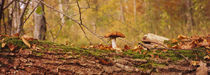 Mushroom on a tree trunk, Baden-Wurttemberg, Germany by Panoramic Images