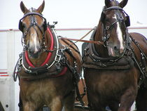Horse-pull-and-chonchow-crazey-man-092