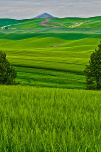 071311-palouse-kamiak-butte-green-wheat-hdr-00