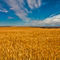 071311-palouse-wheat-field-hdr-00