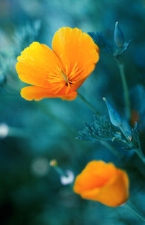 beauty flowers under the sunlight von Dmytro Tolokonov