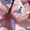 Caerhays-gardens-r0010139