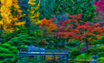 Jap-garden-framed-hdr-ortonize