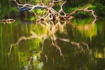 Der Baum am See von pahit