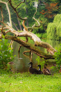 Im Park von pahit