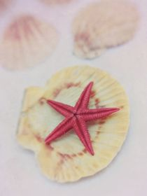 little red starfish von Priska  Wettstein