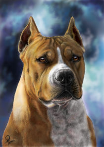 american staffordshire terrier dog  digital painting by Timi Pall