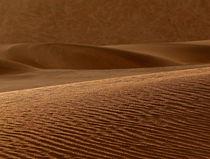 desert beauty by james smit