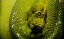 Serpent by Sondre Fagervoll-Stavik