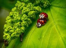 Ladybug rodeo by Alexandre Gaillard