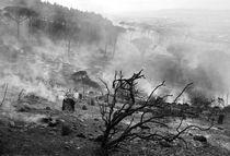 Burned Veld by Stephen Williams