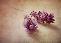 Lavender still life von Franziska Rullert