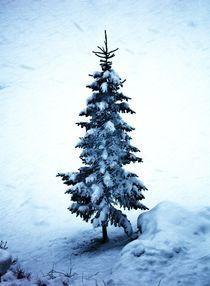 Merry Christmas by Karina Stinson