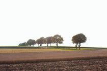Bäume im Feld by Michael Guntenhöner
