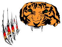 Tiger von Lukasz Wójcik
